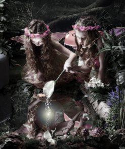 Enchanted Elf & Fairy Product image